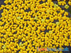 Looe Duck Race
