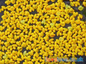 Looe Duck Race