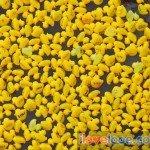 Looe Duck Race 2009 - 28