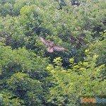 Birdwatching-Looe-1