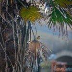 Birdwatching-Looe-2