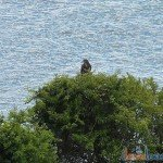 Birdwatching-Looe-5