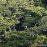 Birdwatching-Looe-6