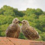 Birdwatching-Looe-7