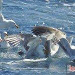 Birdwatching-Looe-8