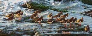 Birds West Looe Beach