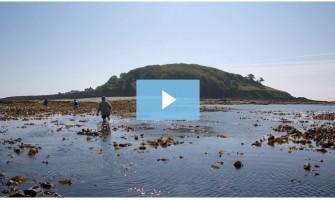 Walk to Looe Island