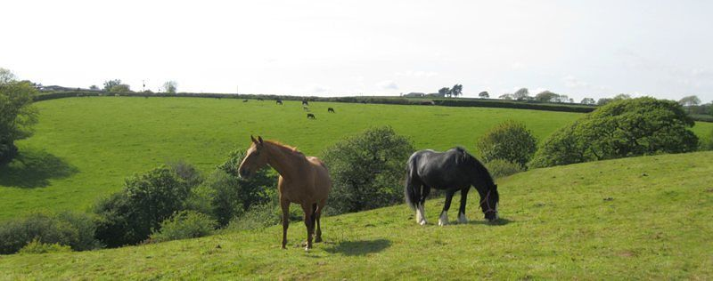 Wilton Mill Horses
