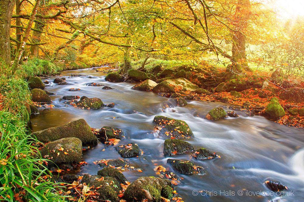 Golitha Falls Autumn Splendour
